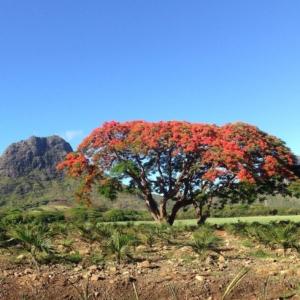 paysage randonnée Ile Maurice