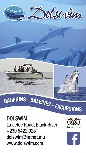 Dolswim pour nager avec les dauphins à l'Ile Maurice