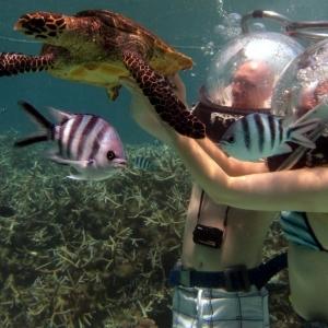 aquaventure marcher sous l'eau plongée tortue ile maurice